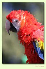 Walsrode Vogelpark 16