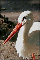 Walsrode Vogelpark 22