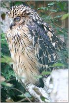 Walsrode Vogelpark 25
