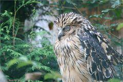 Walsrode Vogelpark 26