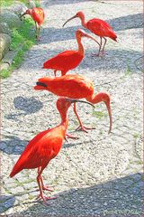 Walsrode Vogelpark 28