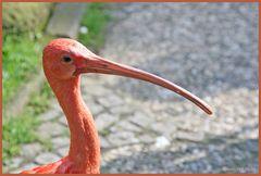 Walsrode Vogelpark 29
