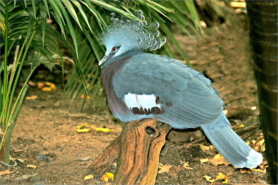 Walsrode Vogelpark 30