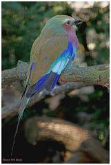 Walsrode Vogelpark 32