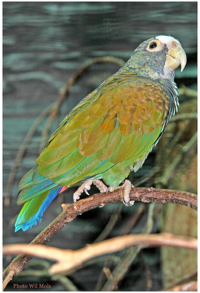 Walsrode Vogelpark 33