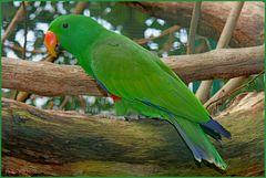 Walsrode Vogelpark 34