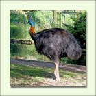 Walsrode Vogelpark 35