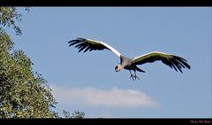Walsrode Vogelpark 36