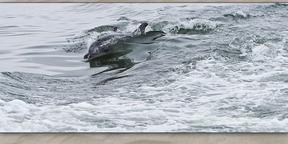 walvis bay 6