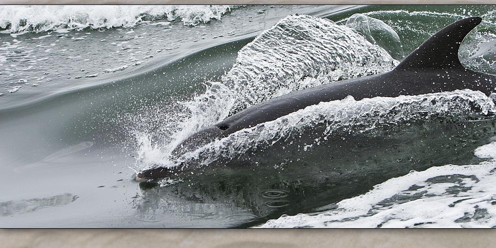 walvis bay 8