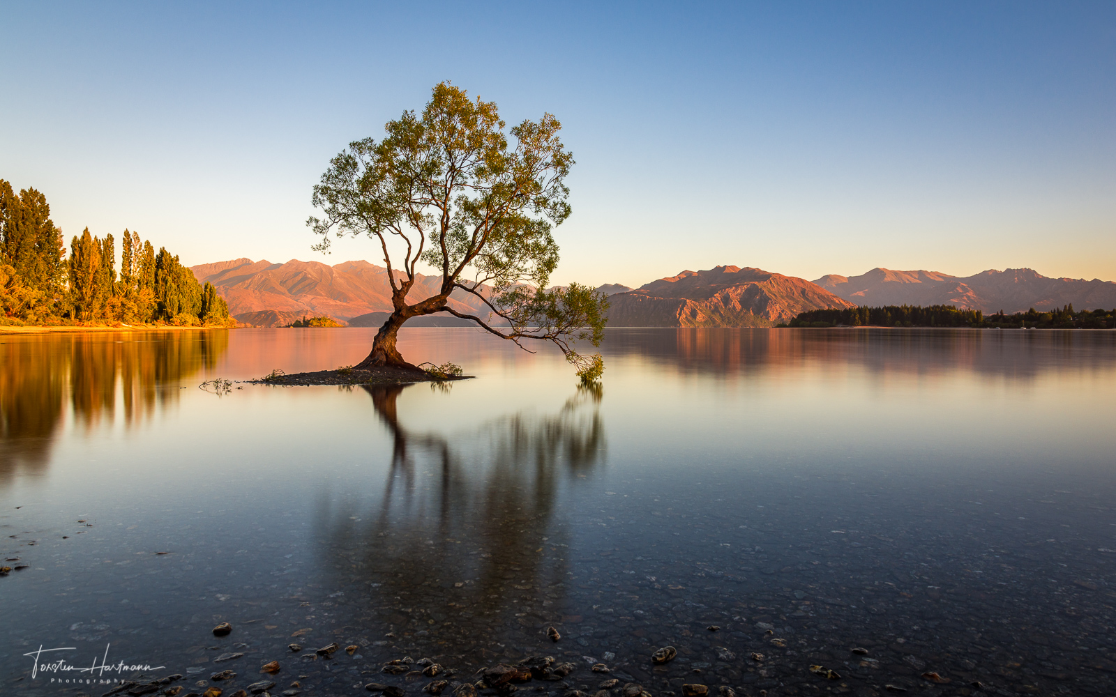 Wanaka Tree at sunrise (New Zealand)