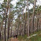 Wanderer im Pfälzer Wald