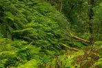 Wandern auf Madeira,