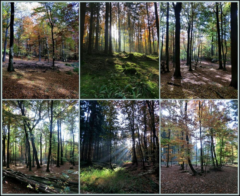 Wandern durch den Herbstwald und tief durchatmen,so erholsam :-)))
