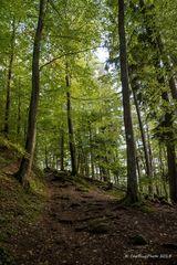Wanderpfad Dahner Felsenpfad (Premiumwanderweg)