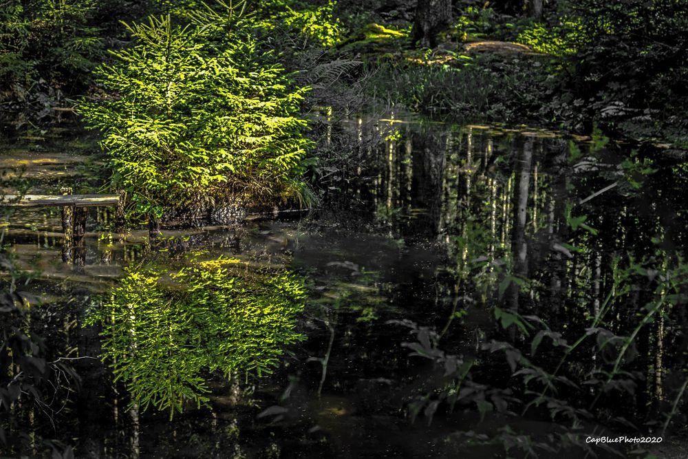 Wanderung an der Nagoldtalsperre Spiegelung im Wald