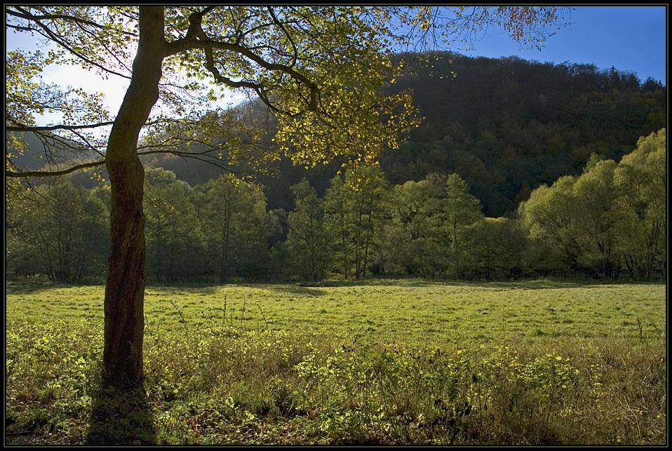 Wanderung durch den Herbst I