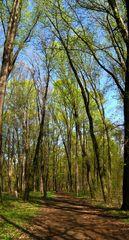 Wanderung im Park