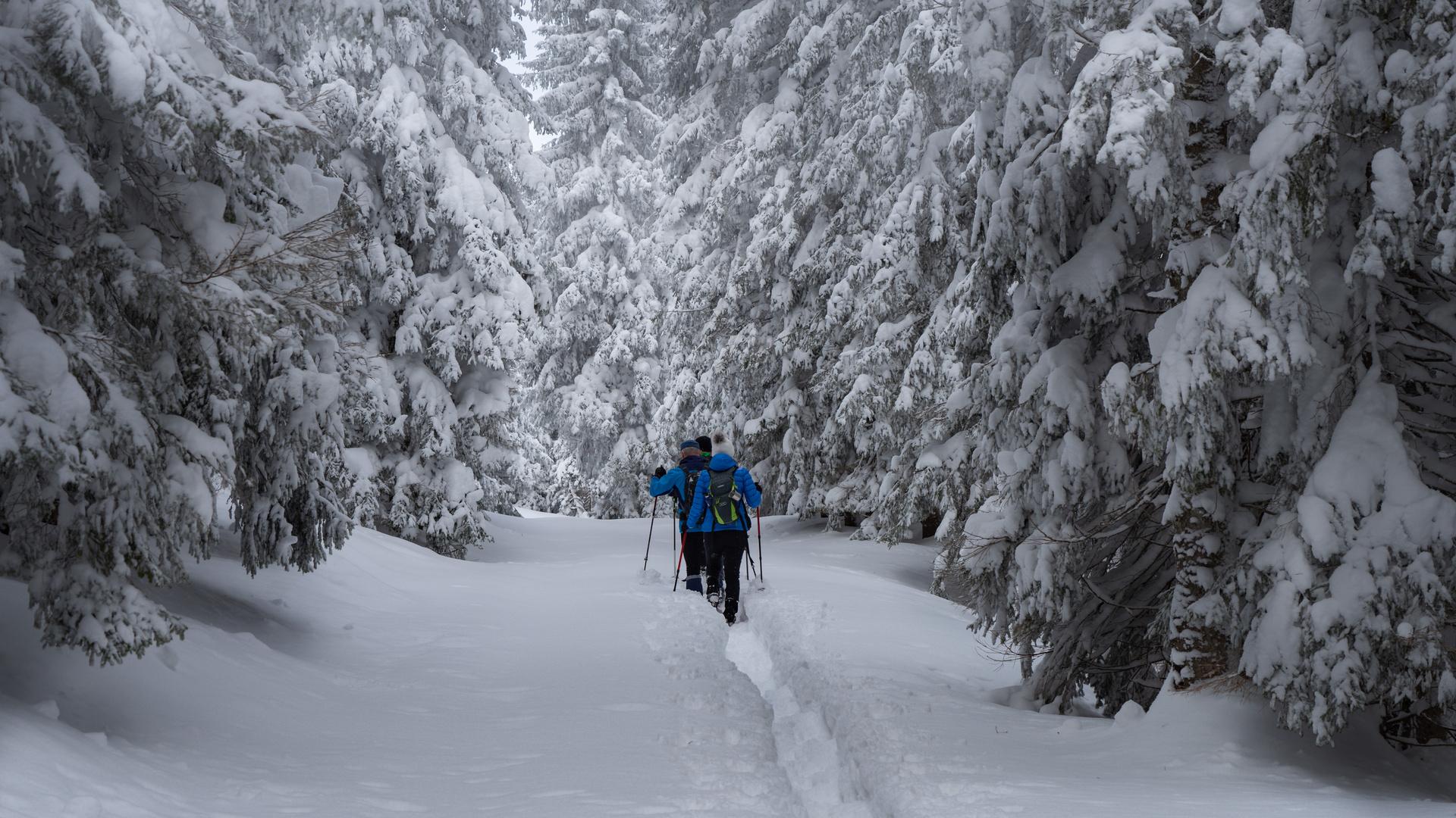 Wanderung im Winterwunderland
