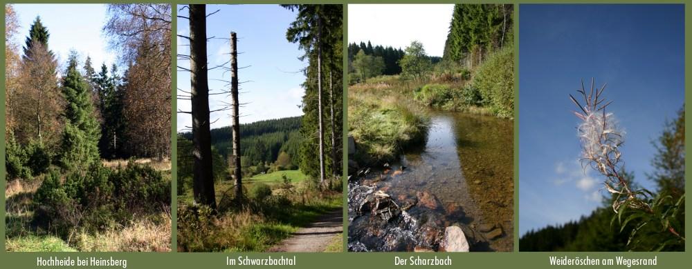 Wanderung ins Schwarzbachtal