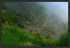 Wanderung zum Pico Grande 3