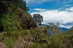 Wanderung zum Risco Wasserfall - 25 Wasserfälle aus 25 Quellen