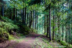 Wanderweg bei Seewald-Schernbach