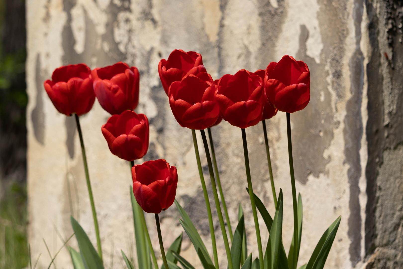 Wandteppich aus Tulpen