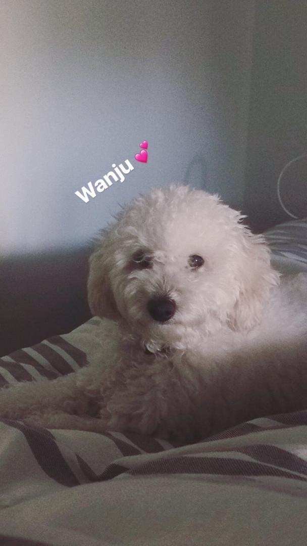 Wanji3