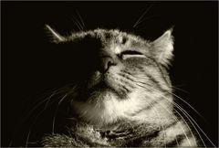 wann ist eine Katze magisch