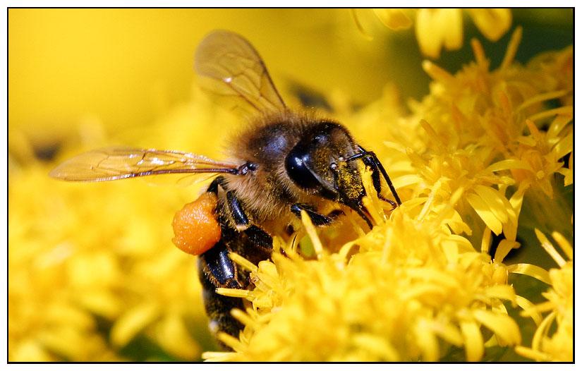 wann kommt der fr hling foto bild tiere wildlife insekten bilder auf fotocommunity. Black Bedroom Furniture Sets. Home Design Ideas