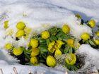 Wann wird es endlich richtig Frühling