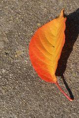 Warme Farben auf kaltem Stein...