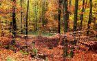 Warme Herbstfarben ... von Rainer Prüm