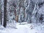 Warmes Licht strahlt in den kalten Wald
