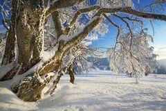 Warmes Licht und eisige Kälte