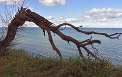 Warnemünde, die Steilküste bei Wilhelmshöhe