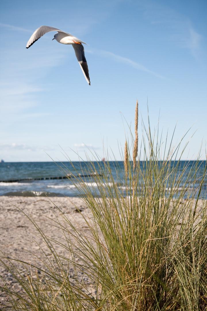 Warnemünder Ostseestrand
