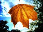 Warschauer Herbst