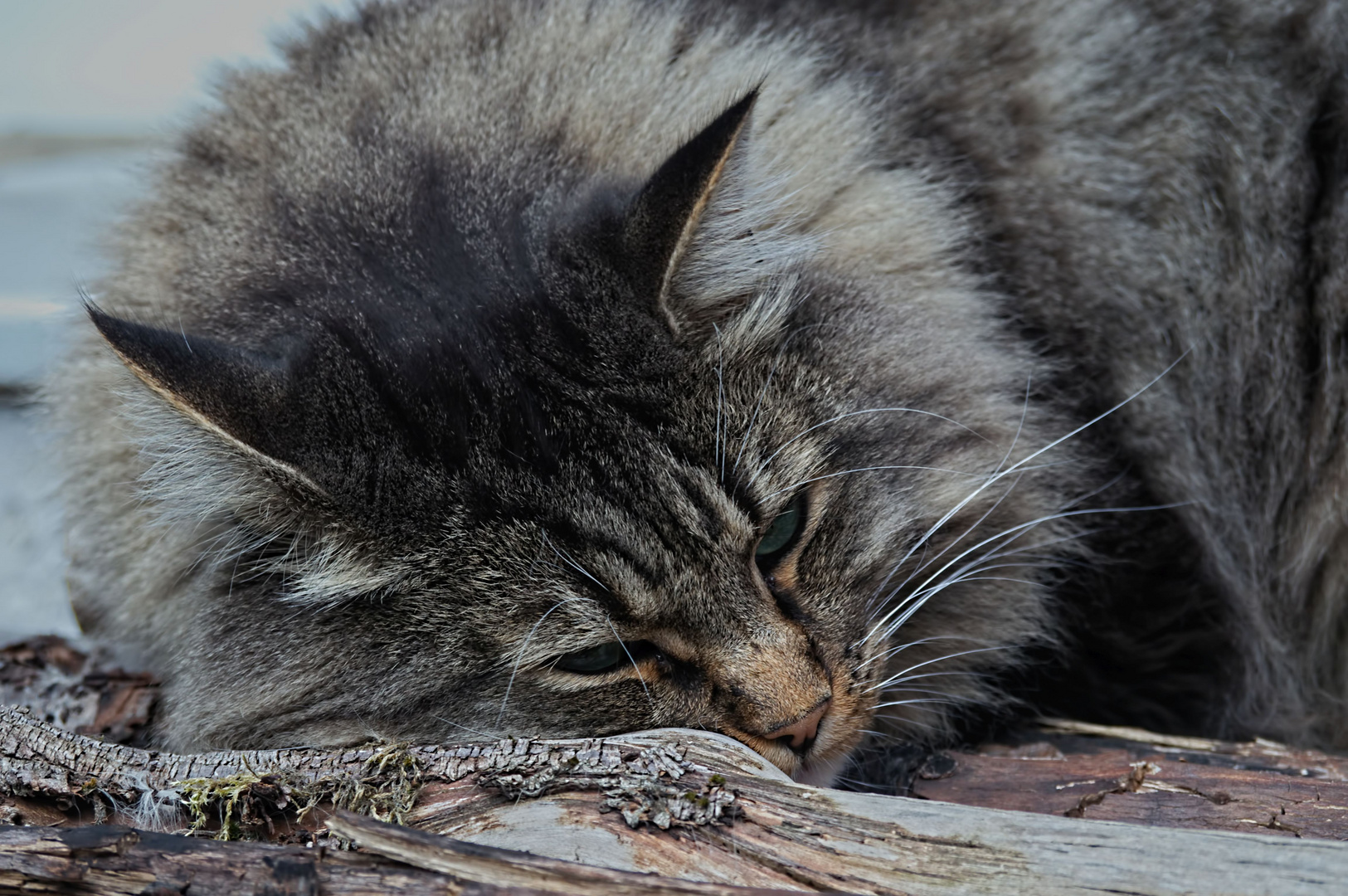 warten foto bild katzen tiere haustiere bilder auf fotocommunity. Black Bedroom Furniture Sets. Home Design Ideas