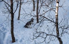 Warten im Schnee ..DSC_2983