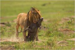 Warthog for Diner