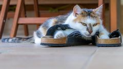 Warum gibt es keine Sandalen in meiner Größe?