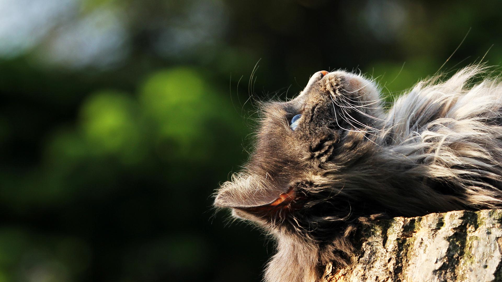 Warum Katzen in den Himmel gucken....
