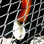 warum so schöne Farben hinter Gittern!!!???