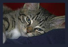was denkt eine Katze in diesem Augenblick..