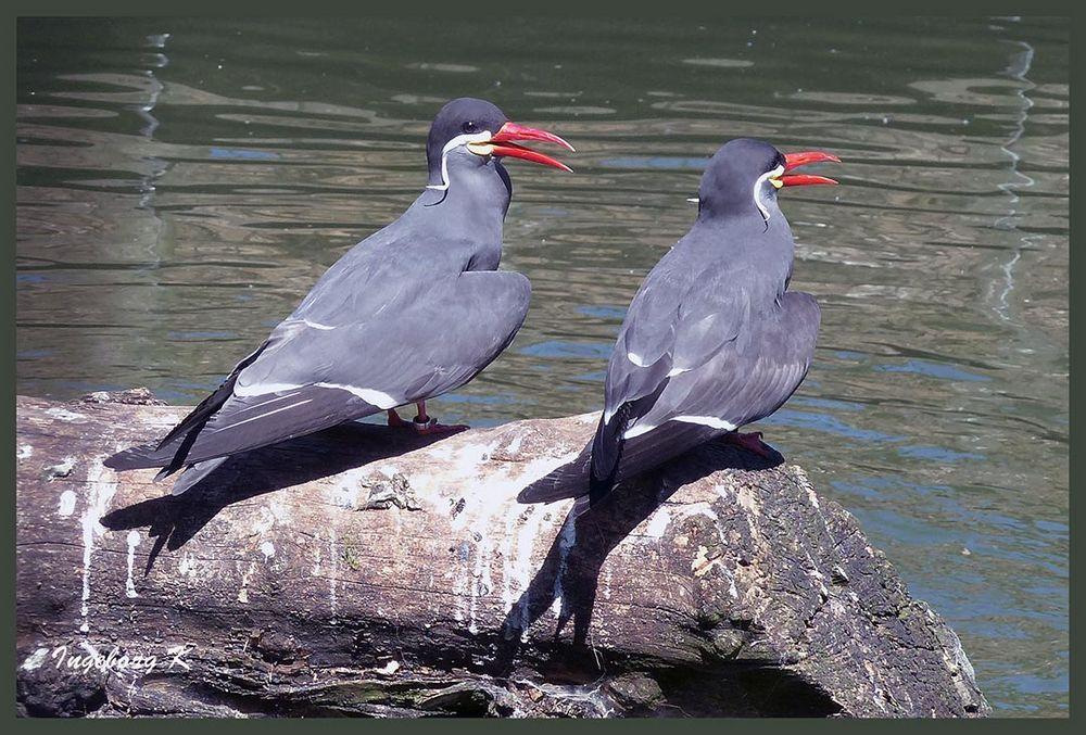 Was diese Vögel wohl zwitschern?