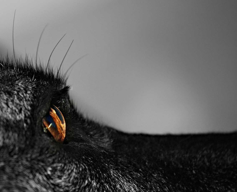 Was ein Hund mit seinen Blicken fängt, vergisst er niemals.