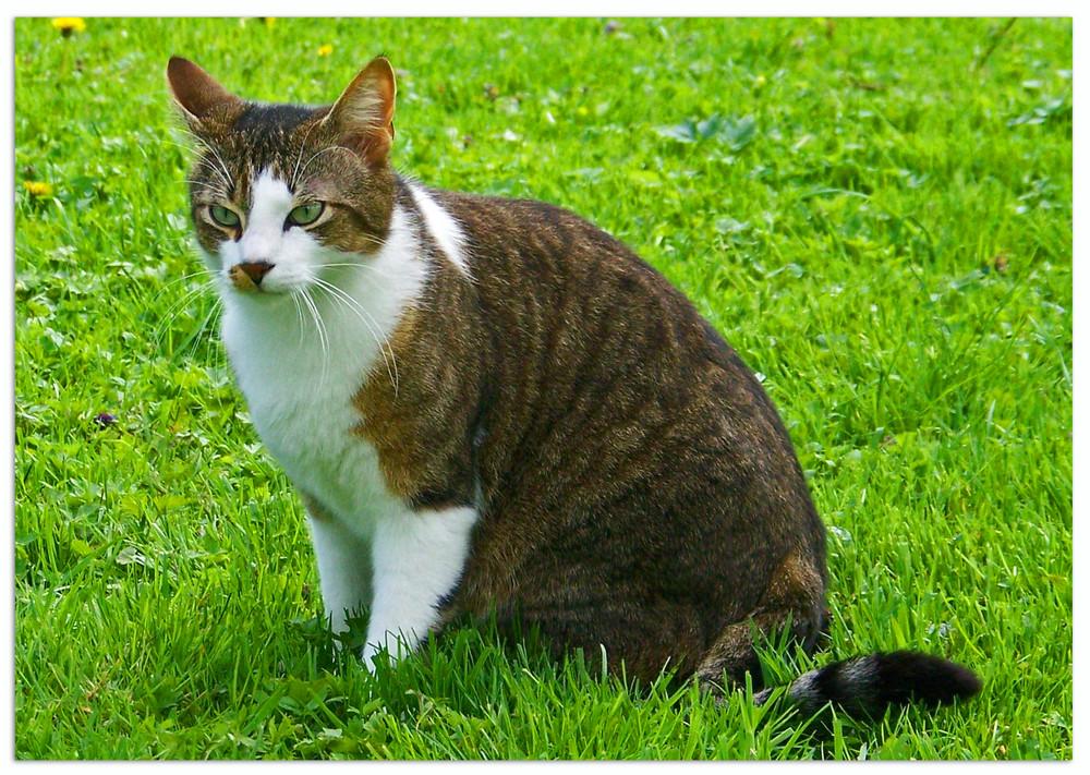 ..was eine Katze wohl so denkt ???