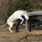 Was Esel so im Frühling treiben . . .